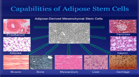 stem cell abilities